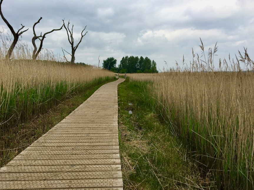 Just a view along the riverside boardwalk at Snape
