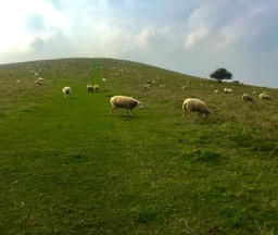 hill with sheep